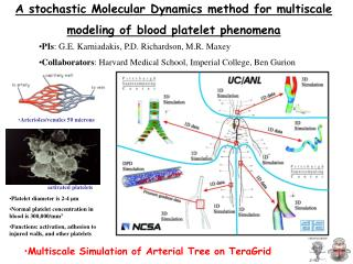 A stochastic Molecular Dynamics method for multiscale modeling of blood platelet phenomena