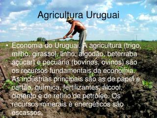 Agricultura Uruguai