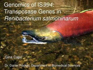 Genomics of IS 994 : Transposase Genes in  Renibacterium salmoninarum