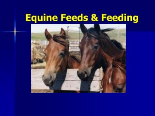 Equine Feeds  Feeding