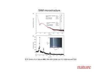 ECP Smits et al. Nature 455 , 95 6 -9 5 9 (2008) doi:10.1038/nature07 320