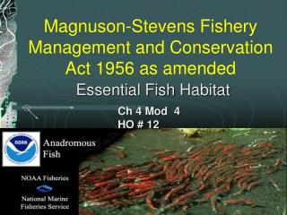 Magnuson-Stevens Fishery Management and Conservation Act 1956 as amended