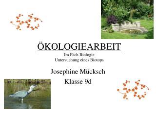 ÖKOLOGIEARBEIT Im Fach Biologie Untersuchung eines Biotops