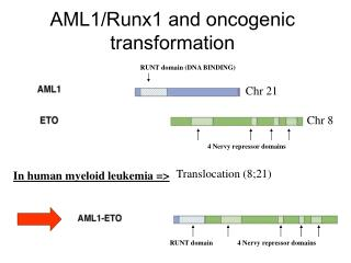 AML1/Runx1 and oncogenic transformation