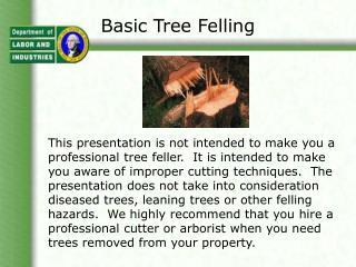 Basic Tree Felling