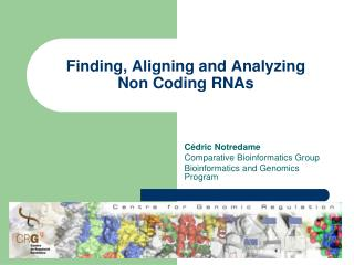 Finding, Aligning and Analyzing Non Coding RNAs