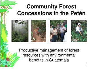 Community Forest Concessions in the Pet n