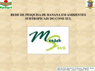 REDE DE PESQUISA DE BANANA EM AMBIENTES SUBTROPICAIS DO CONE SUL