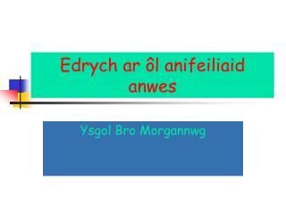 Edrych ar ôl anifeiliaid anwes