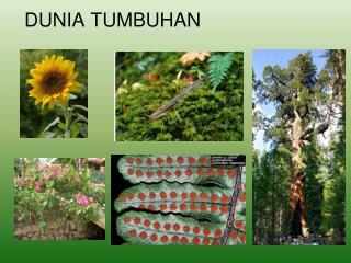DUNIA TUMBUHAN