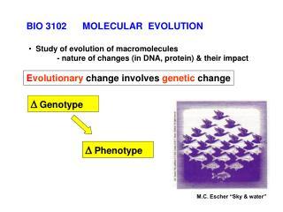 E volutionary  change involves  genetic  change