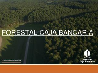 FORESTAL CAJA BANCARIA