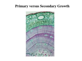 Primary versus Secondary Growth