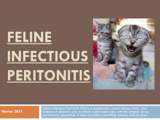 Feline Infectious  P eritonitis