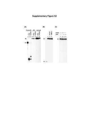 Supplementary Figure S2