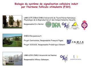 Biologie du système de signalisation cellulaire induit par l'hormone folliculo-stimulante (FSH).