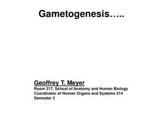 Gametogenesis…..