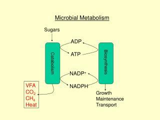 ADP   ATP   NADP  NADPH