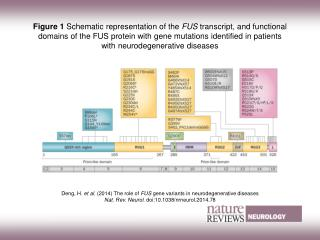 Deng, H.  et al.  (2014)  The role of  FUS  gene variants in neurodegenerative diseases