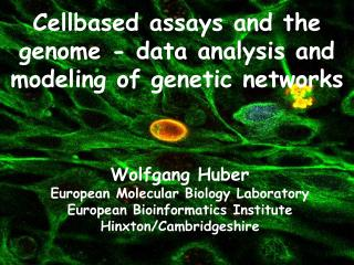 Cellbased assays and the genome - data analysis and modeling of genetic networks
