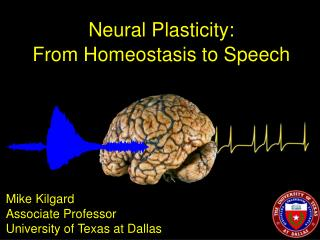 Neural Plasticity: From Homeostasis to Speech