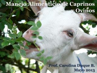 Manejo Alimenticio de Caprinos y Ovinos
