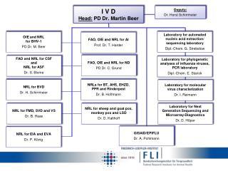 I V D Head:  PD Dr. Martin Beer