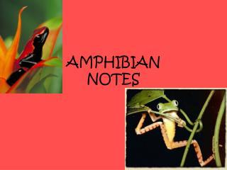 AMPHIBIAN NOTES