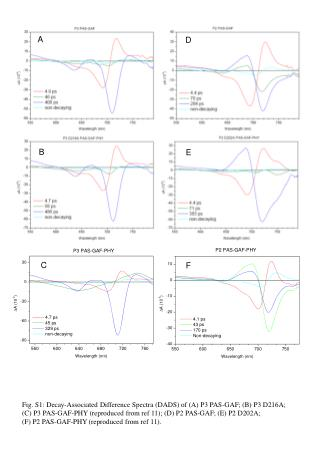 Fig. S1: Decay-Associated Difference Spectra (DADS) of (A) P3 PAS-GAF; (B) P3 D216A;