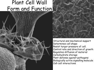 Plant Cell Wall  Form and Function