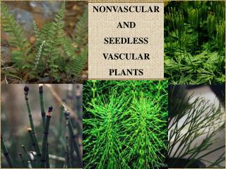 NONVASCULAR  AND  SEEDLESS VASCULAR PLANTS