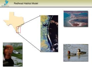 Redhead Habitat Model