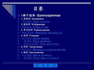 I 裸子植物  Gymnospermae 1. 苏铁科  Cycadaceae *(1) 苏铁  Cycas revoluta 2. 银杏科  Ginkgoaceae