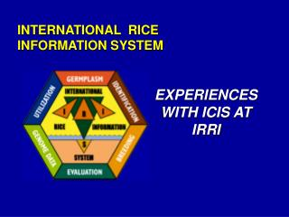 INTERNATIONAL  RICE  INFORMATION SYSTEM