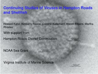 Continuing Studies of Viruses in Hampton Roads and Shellfish