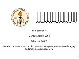 Bi 1 Session 4  Monday, April 3, 2006 What is a Brain?