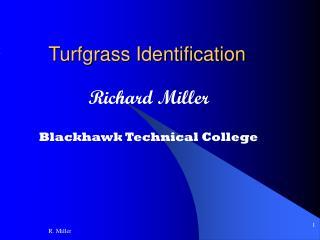 Turfgrass Identification