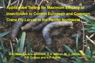 Application Timing for Maximum Efficacy of  Insecticides to Control European and Common   Crane Fly Larvae in the Pacifi