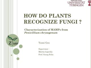 HOW DO PLANTS RECOGNIZE FUNGI ?
