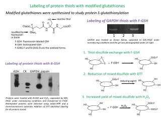 Labeling of protein thiols with modified glutathiones