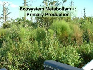 Ecosystem Metabolism 1:   Primary Production