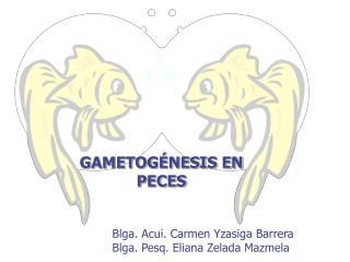 GAMETOGÉNESIS EN PECES