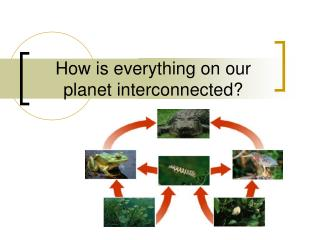 How is everything on our planet interconnected?