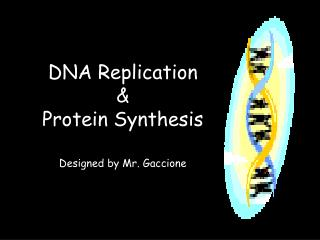 DNA Replication  &  Protein Synthesis Designed by Mr. Gaccione