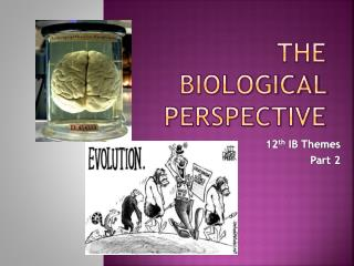 The Biological Perspective