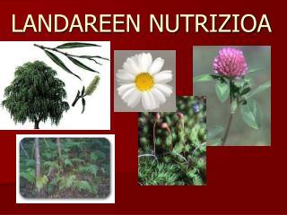 LANDAREEN NUTRIZIOA