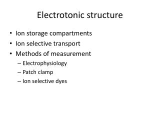 Electrotonic structure