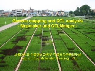 Genetic mapping and QTL analysis - Mapmaker and QTLMapper -
