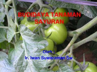BUDIDAYA TANAMAN SAYURAN