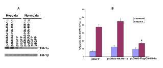 pcDNA3-HA-Hif-1 a